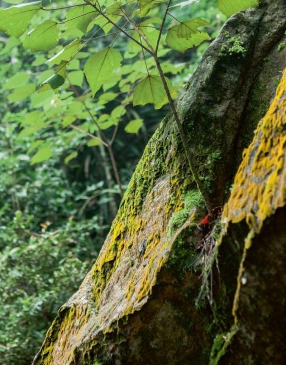 路上植物多樣豐富。岩石的狹縫也生出植物。
