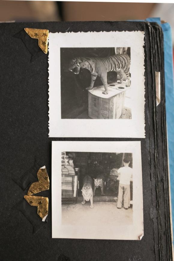 紙紮老虎骨架,披上真老虎皮,死了的老虎仍能嚇人。