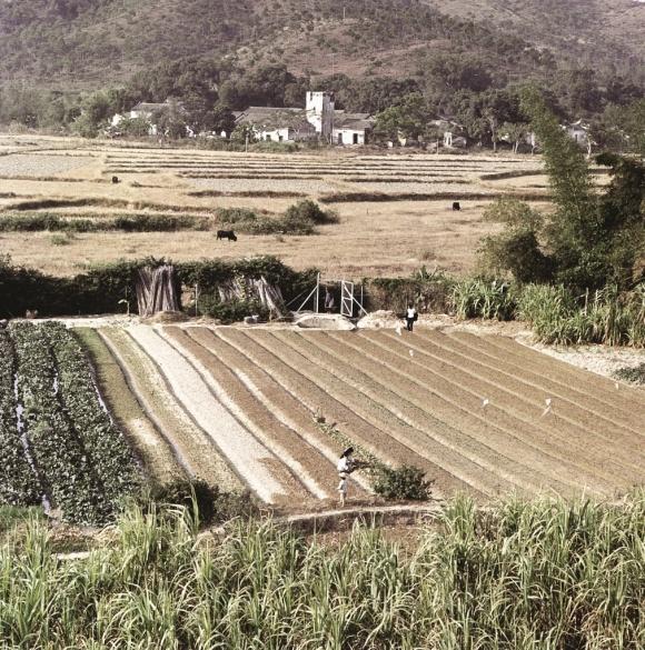 邊界兩邊連綿不絕的農地(政府新聞處圖片)