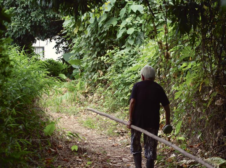 高婆婆大清早出門,穿過小叢林下田耕作。