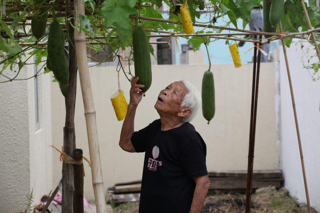 微風撲面,高婆婆在秋天最期待是粟米收成時。
