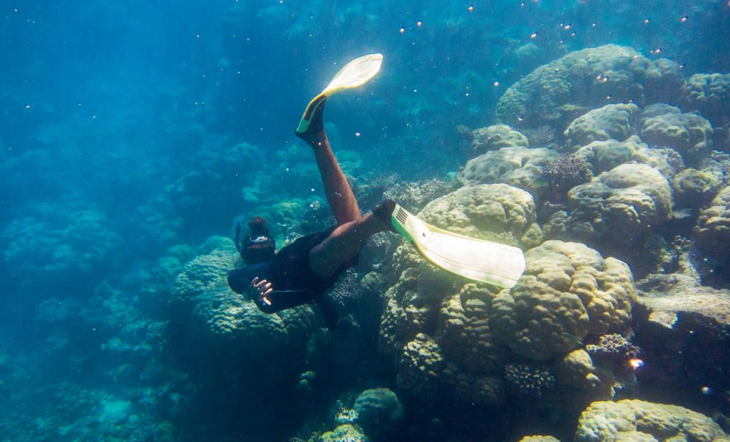 Lisa 經常探望海底的魚類朋友,探測水底的生態狀況,為海洋把脈。