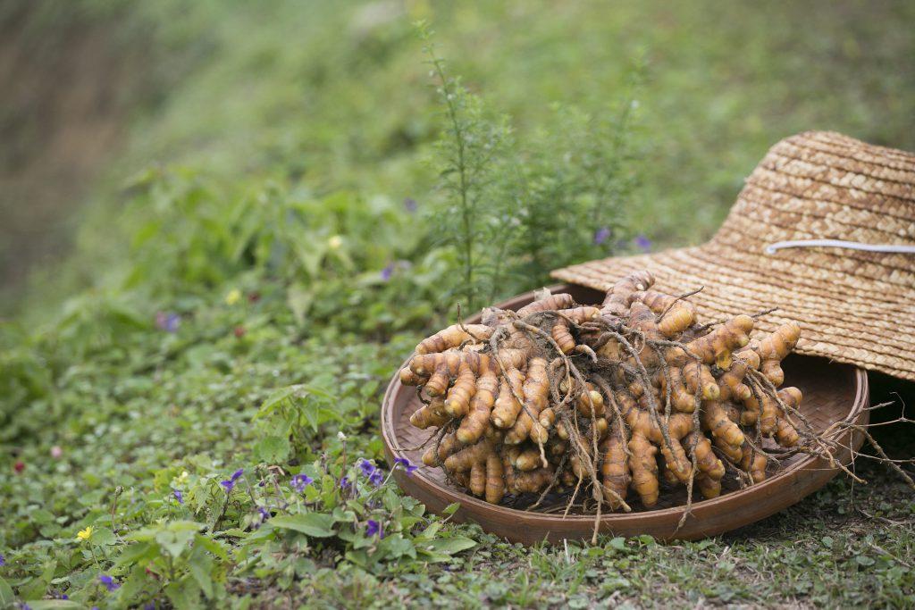 種,小黃薑是肉薑的一種,薑片呈淺黃色,據說更辣更濃。