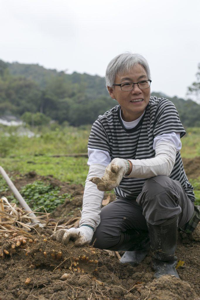 農夫May只有四年種薑經驗,也能種出大批收成。