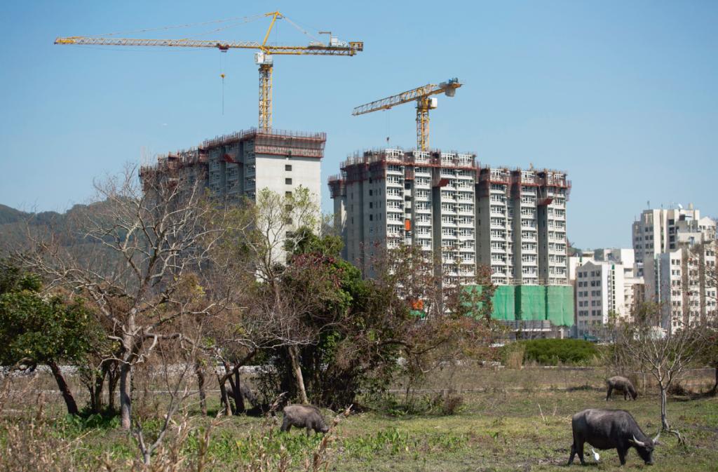 香港人愈住愈細,愈搬愈偏遠,水牛賴以為生的草地亦買少見少。