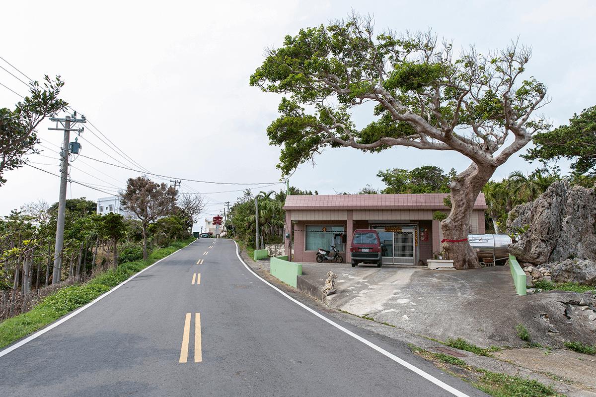 廖怡晴家門口,百年茄冬 樹正是長期落山風「裁剪」 出來的姿態。