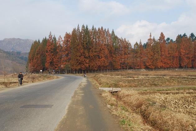 元山市郊協同農場的秋景