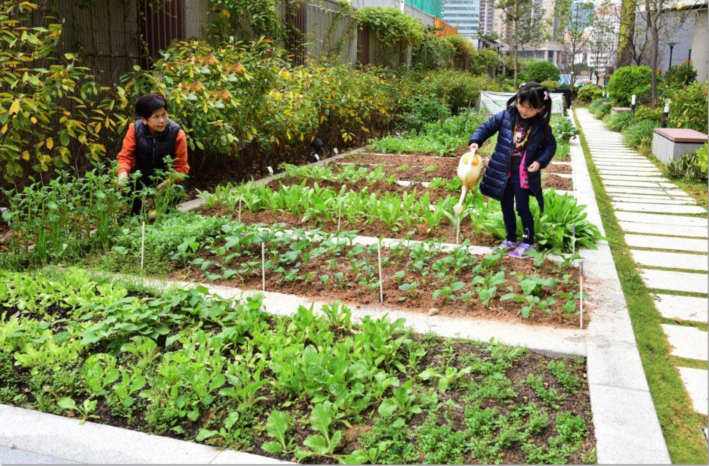 農圃可引發小孩子的好奇心,花草代替電子用品成為他們最佳玩伴。