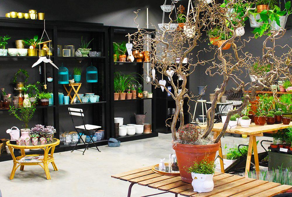 有機花店提供的盆栽種類繁多且別緻。(圖片來源:Curbed)