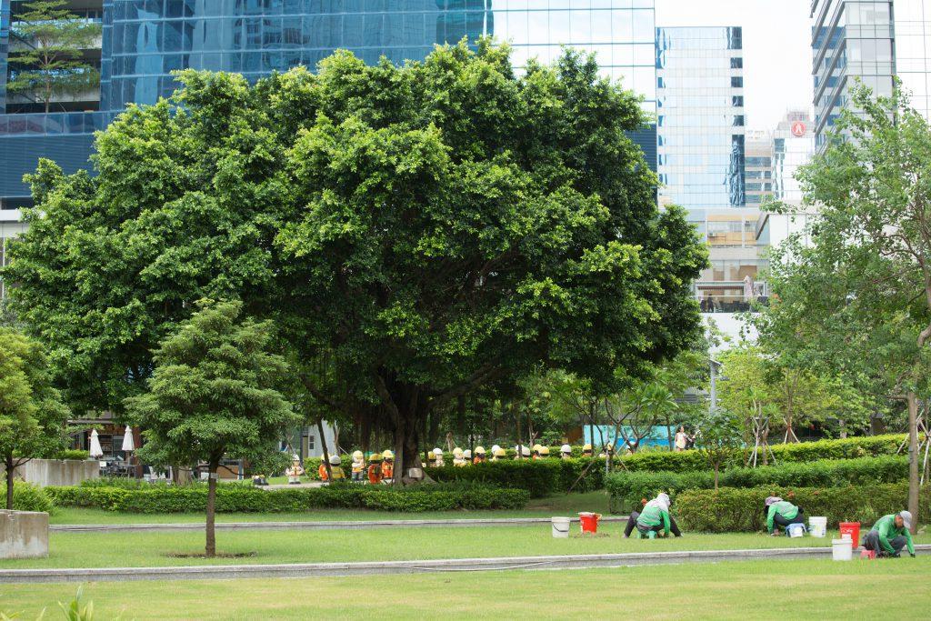 零碳天地室外種植三百多棵樹,綠化區佔整體面積約一半,相信在夏天時可為周邊地區降低一至兩度,用電量可減6%至10%。