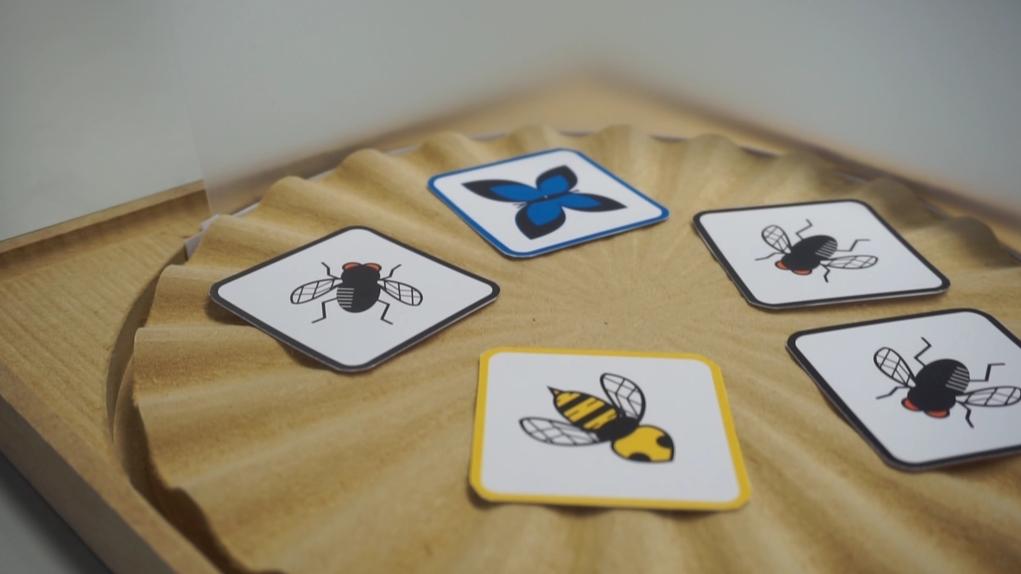 烏蠅、蝴蝶和蜜蜂背面印有分數,反轉卡片,長者就可計算手上卡片共值多少分,訓練腦筋。