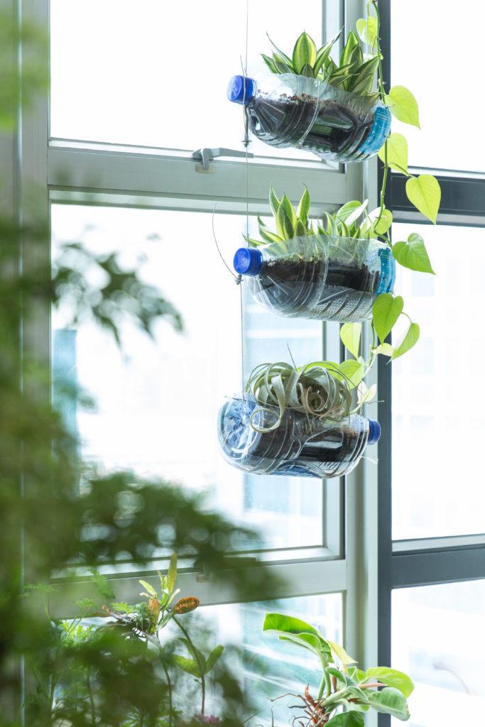 辦公室啟用初期未有自來水龍頭,因此需要暫時飲用樽裝水,於是他們忽發奇想切開水樽變成吊掛盆栽。