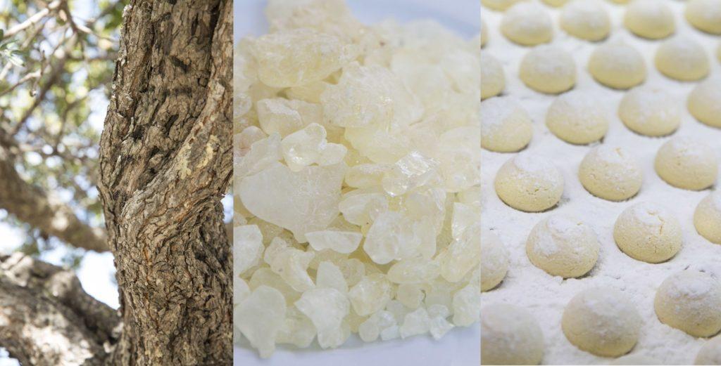 乳香脂樹(左)、自然乾涸的乳香脂顆(中)、Imren發明的乳香脂曲奇(右)