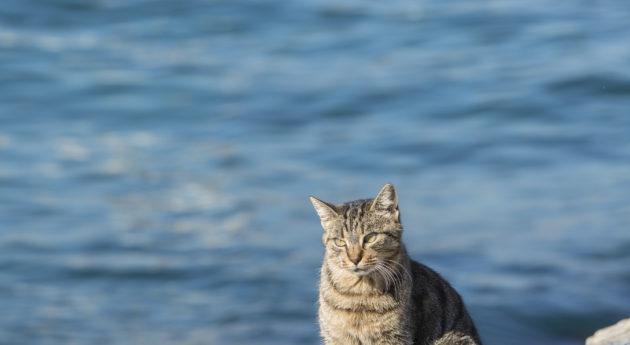 海邊的貓,其實海都是屬於貓的。