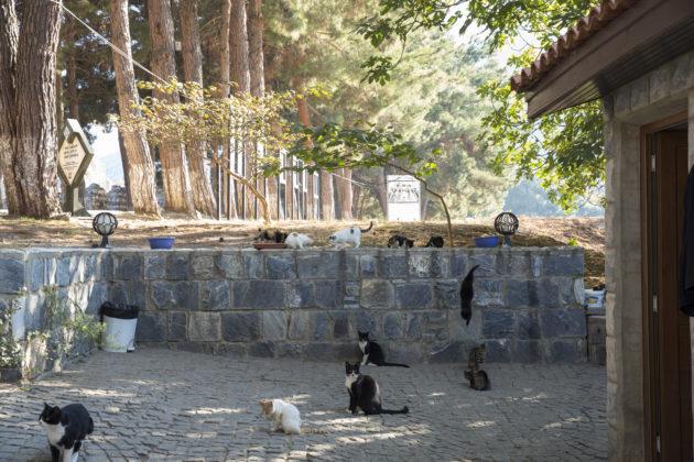 走到每個景點,連以弗所都有人餵貓。
