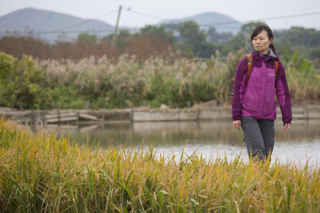 香港觀鳥會項目經理Vicky回想2009年開始復耕後,塱原的禾花雀數量漸漸增多。