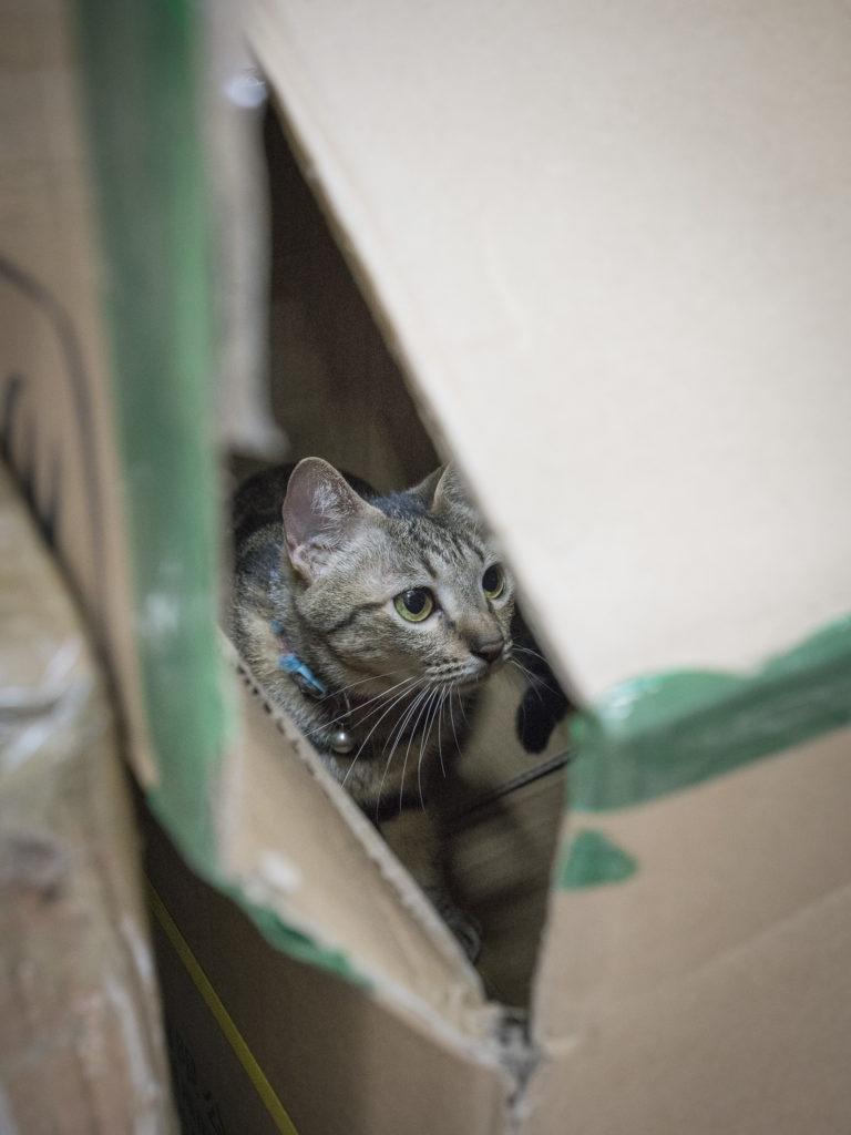 godric_180105_cats_web-02