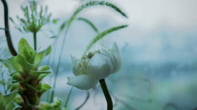 香港 6月那雨天的白蓮,仍待綻放。(圖片由受訪者提供)