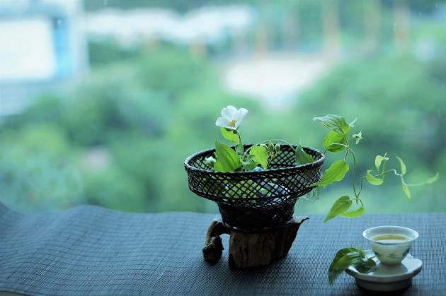 在家中賞山梅花、利休草,品梔子花窨烏龍茶。(圖片由受訪者提供)