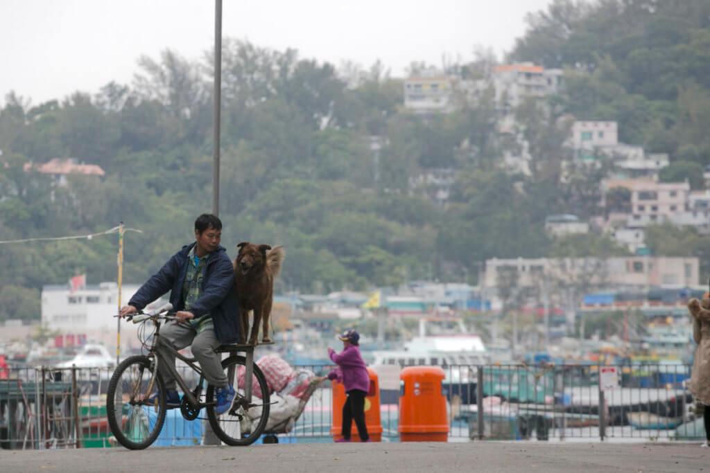 我是東芝,今年四歲,最愛坐主人的單車尾。