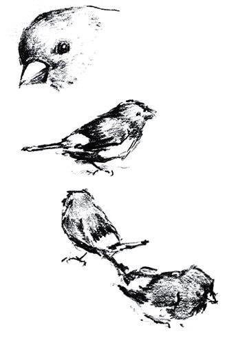 不同的季節,雀鳥都有不同形態和習性,可說是大自然的天文台。(插畫由受訪者提供)