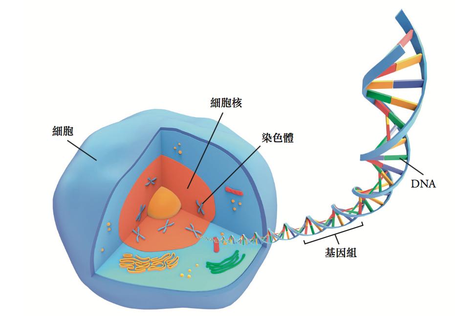 我們體內每個細胞,都內含着不同的基因。