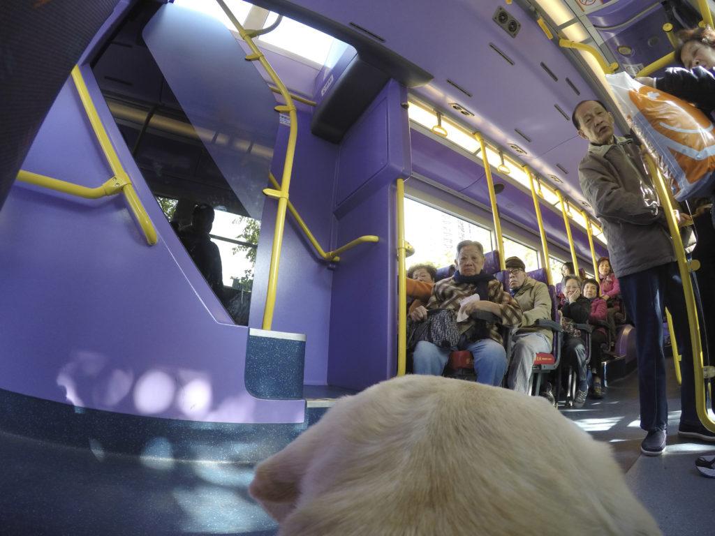 我最喜歡搭巴士了!