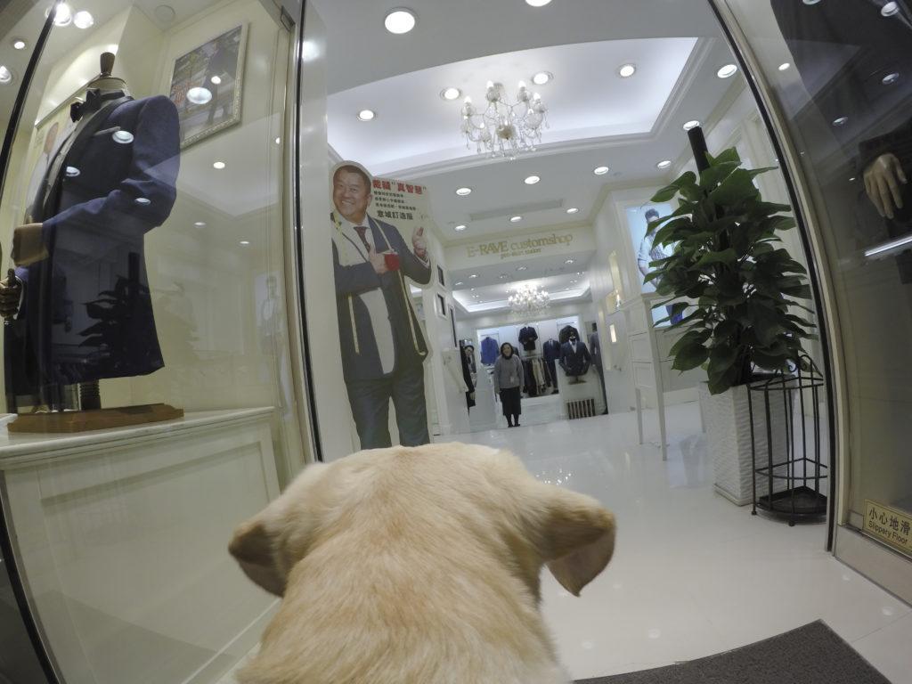 不知道這間商舖有沒有售賣狗狗服飾呢?