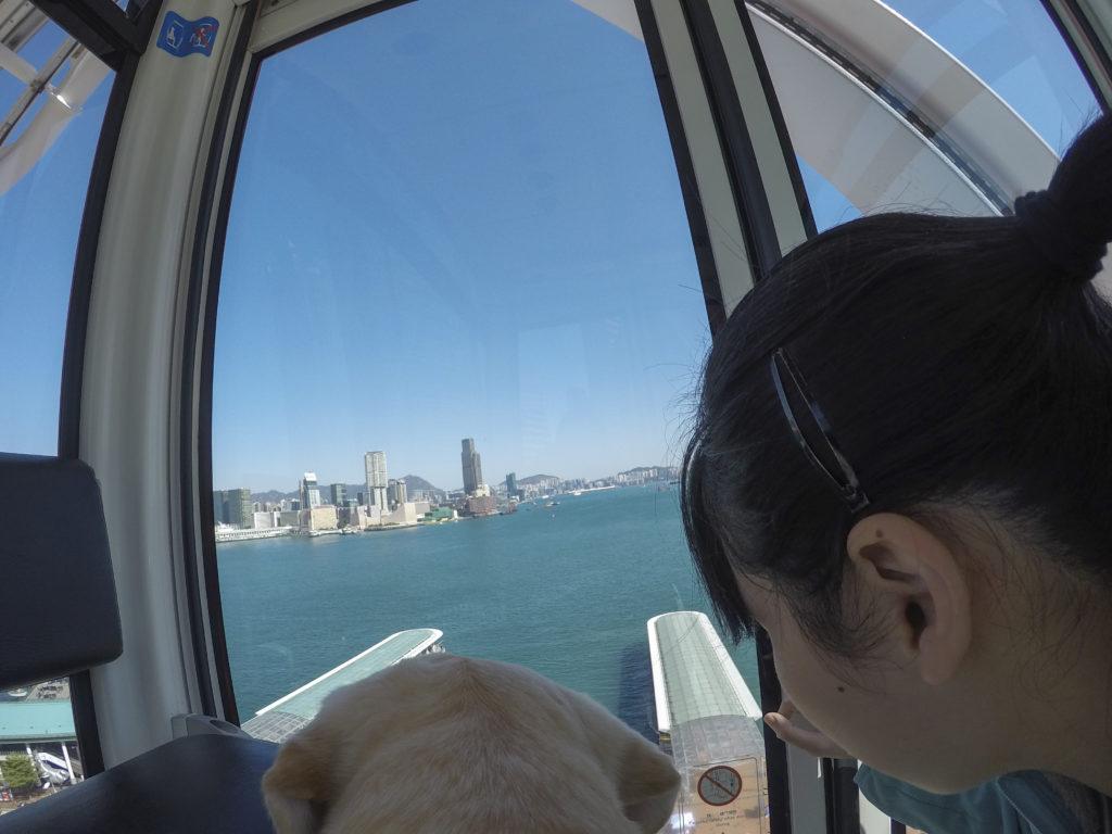 我飛了上去,從高空俯瞰的維港好美!