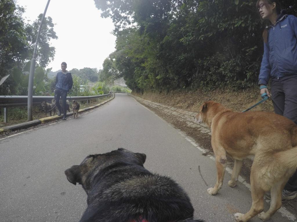路上遇到職員哥哥帶其他狗狗散步。朋友,你找到愛惜你的主人嗎?