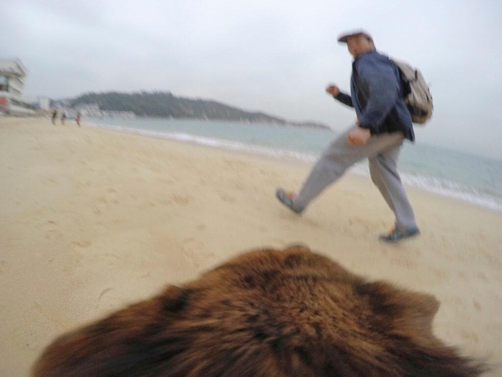 主人常帶我去沙灘游冬泳