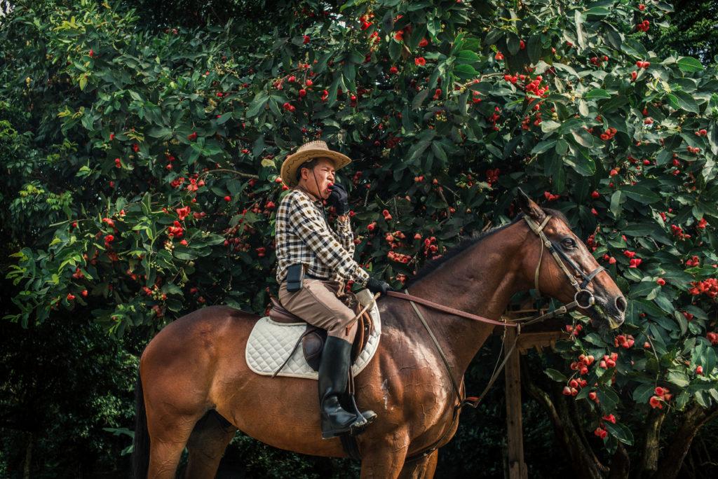 梁福元在其大棠有機生態園邊騎馬邊吃蓮霧,整個畫面很超現實。(Billy H.C. Kwok作品)