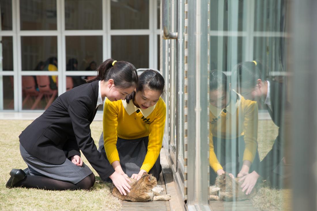 兩位現任學生都喜歡貓,溫柔且有愛心。