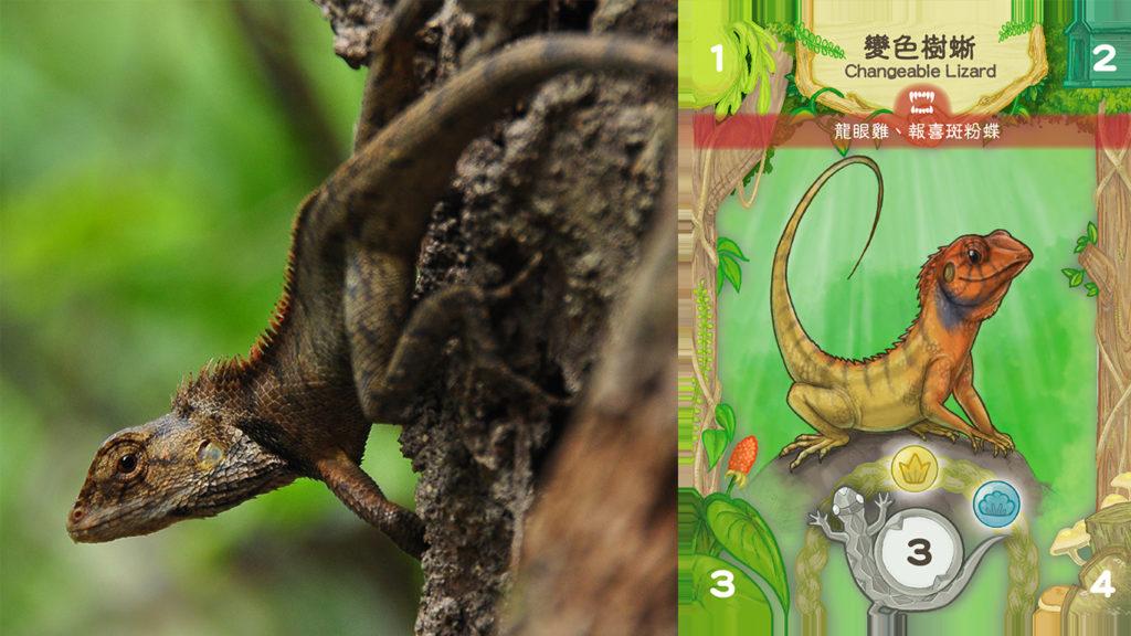 香港戶外生態教育協會創辦人Xoni認為以生態教育主題的桌遊,要準確地畫出動物模樣,從卡牌中可得知變色樹蜥能生活在草坡及灌木林中。