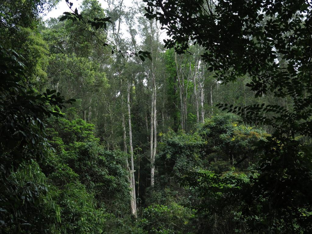 中間幾棵白色的樹是人工植林,四周的則是次生林,一片草坡足足要歷時五十年才年變成次生林。