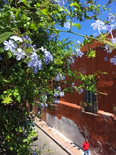 San Miguel de Allende 城內一隅