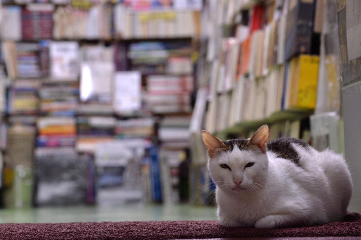 香港的動物文學,着重描寫城市、人與動物的關係,國內或台灣的卻推得更廣,把人與動物置於大自然當中。