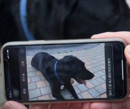 """用手機App""""Tap Tap See""""拍下眼前事物,會讀出「成年拉布拉多犬」。"""