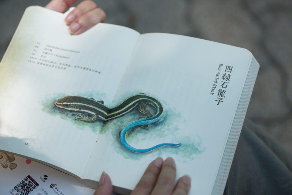 不少人都只留意《尋牠》中的插圖,卻忽略了描述動物的文字。