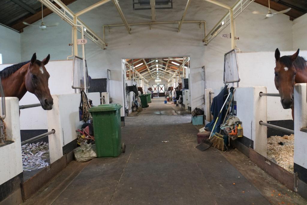魚河騎術學校