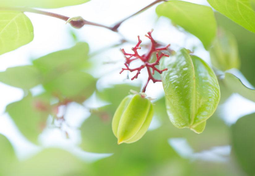 宏伯伯栽培的碩果,成為了安老院生活的美好寄託。