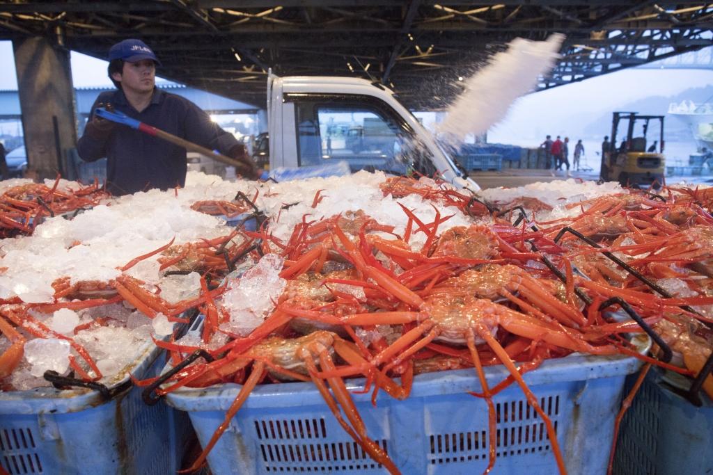 新鮮紅豔豔的紅楚蟹從日本深海上水