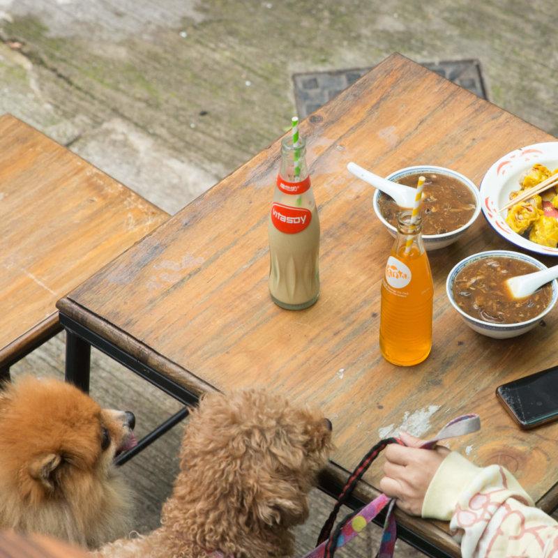 人和寵物都可以坐下來,慢慢吃碗仔翅,連狗狗也感覺被款待。