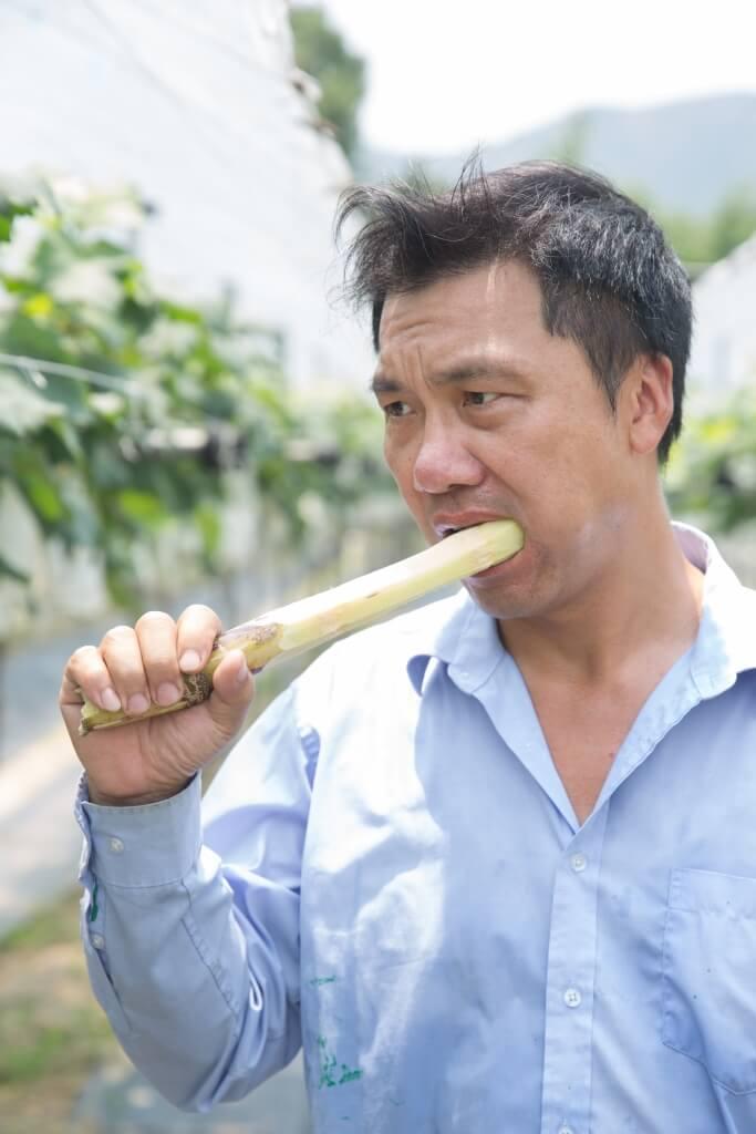 楊先生自小就很喜歡甘 蔗,當在田間工作至正 午,他便會品嘗新鮮甘 蔗消暑解熱。