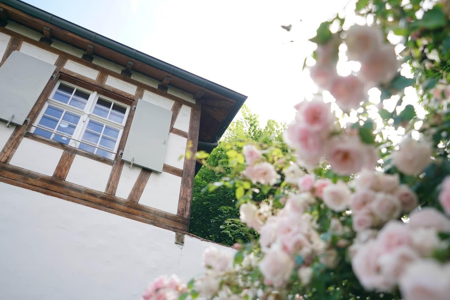 她的家是座古蹟,鄰舍在屋前種了玫瑰。