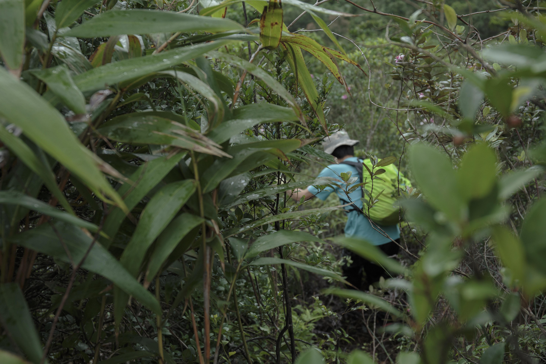 郊野義務搜索隊的成員,正穿越叢林進行搜索演習。