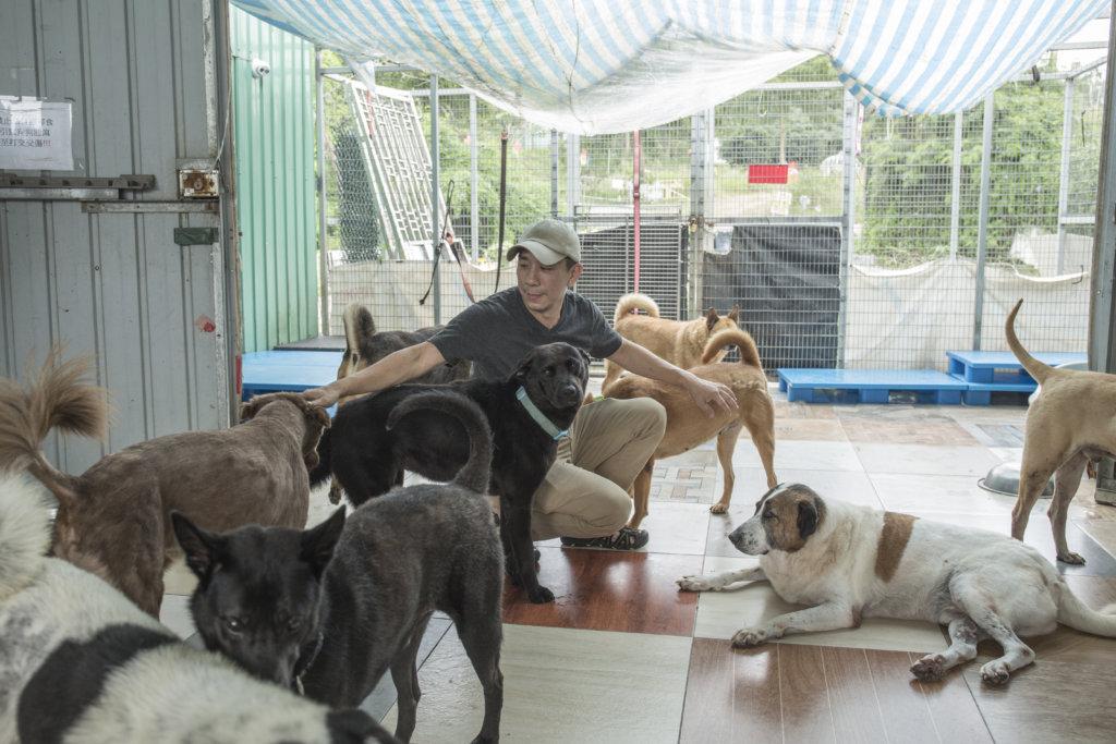 流浪狗的生死或許沒人在意,Kent卻把牠們的生命看得很重。