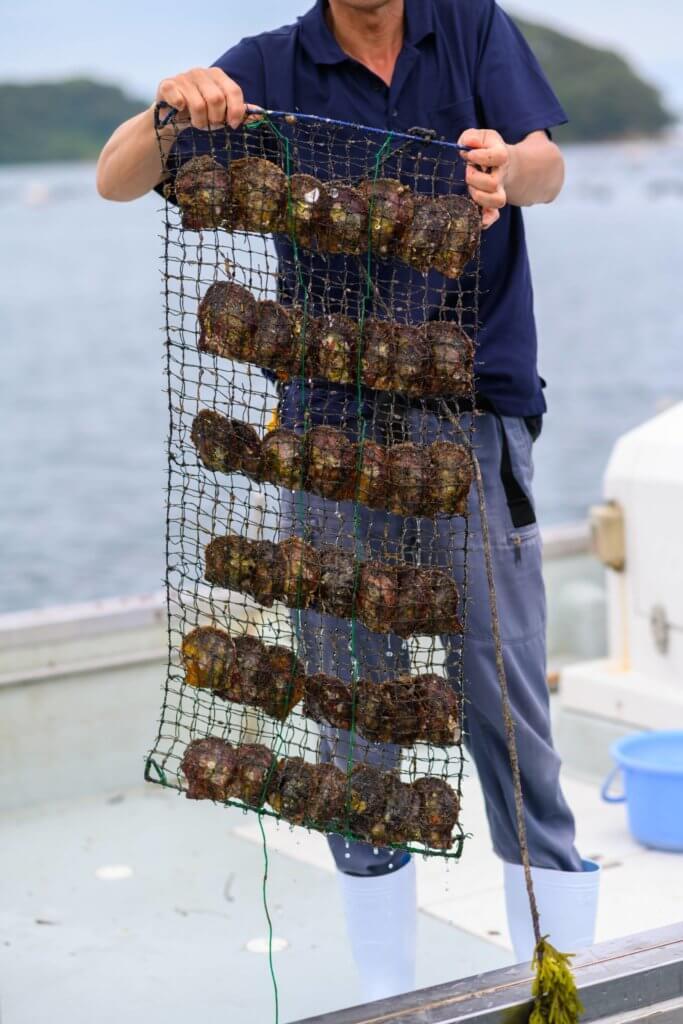 近藤先生為我們展示植核後的母貝,整齊排列,並放在較深海的位置。
