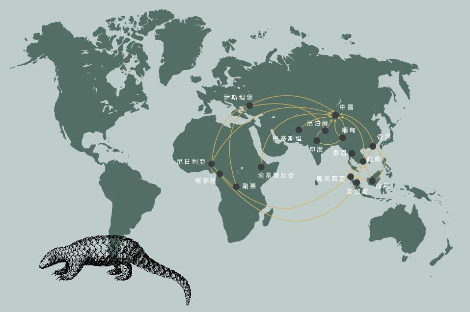 國際野生物貿易研究組織(TRAFFIC)和世界自然保護聯盟(ICUN)在2017年發布一項報告,研究了2010–2015年穿山甲的全球緝獲和販運路線。五年間,全球至少發生了一千二百七十宗穿山甲走私案件,涉及六十七個國家/地區,最主要的走私目的地是中國。全球有一百五十九條走私路線,其中有直接運往中國,也有很多條轉運路線。每年有廿七條新增路線。這說明,走私網絡有密度高,流動性強,必要時,走私者們可以靈活調換線路以躲避執法。最近幾年,非洲的穿山甲貿易顯著增長,有直接到中國,也開始有經由德國等歐洲國家轉運到亞洲。(資料來源:Nepali Times TRAFFIC/IUCN)