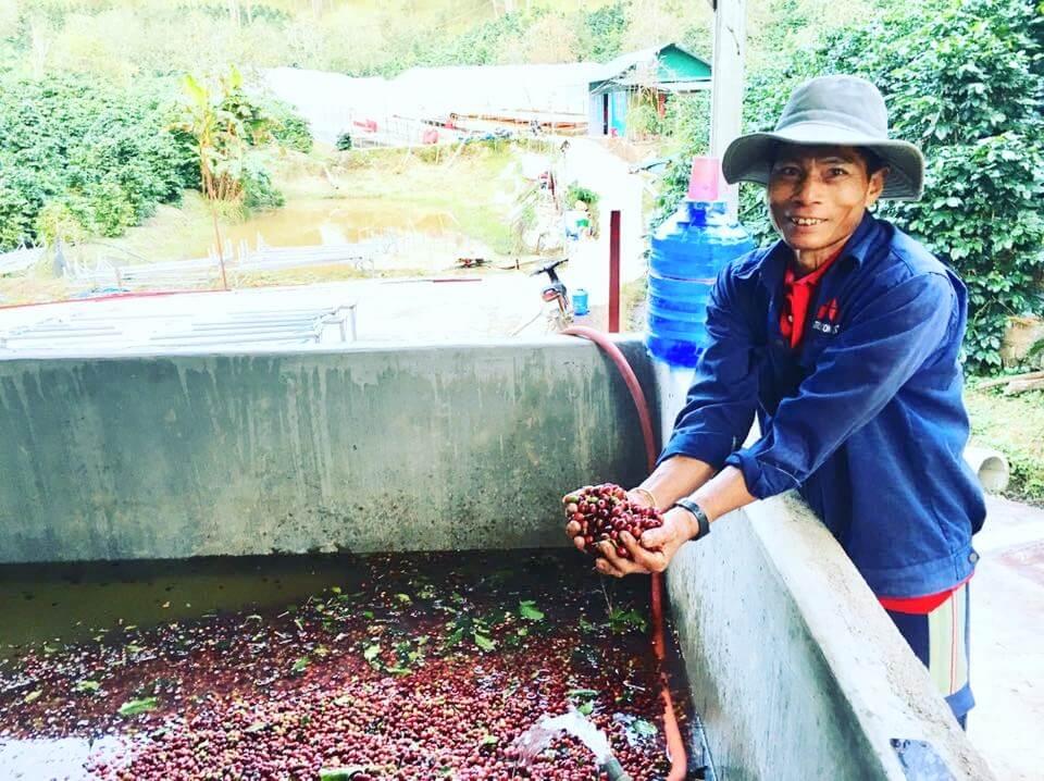 新一代的咖啡農組織起合作社, 發起「高品質咖啡計劃」,教育族人種植阿拉比卡咖啡,相關打理、收成和 加工的技巧,確保成品的水準,以及農民的穩定收入。